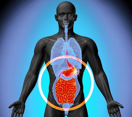 Dónde se encuentra la flora intestinal