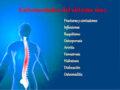 Enfermedades que afectan el sistema óseo