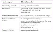 Cuál es la función del sistema endocrino