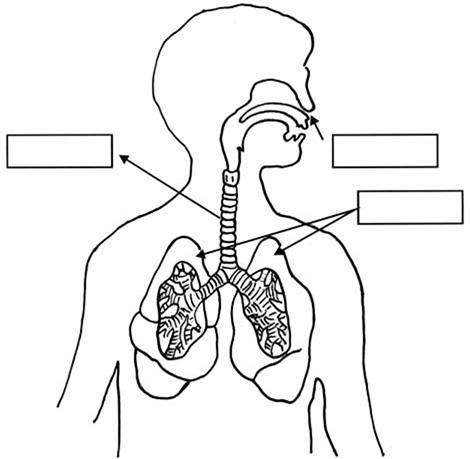 Imágenes del Sistema Respiratorio sin nombres