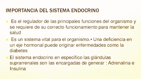 Importancia del sistema endocrino en el ser humano