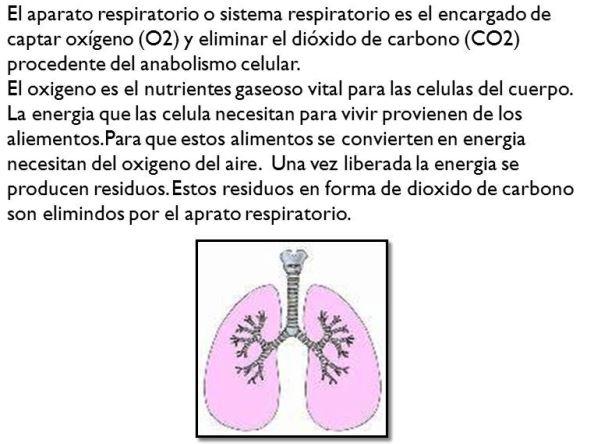 Qué es el sistema respiratorio