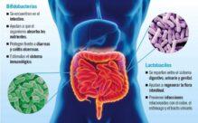 Bacterias beneficiosas para la flora intestinal