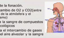 Características del sistema respiratorio