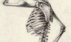 Cómo cuidar los huesos del cuerpo humano