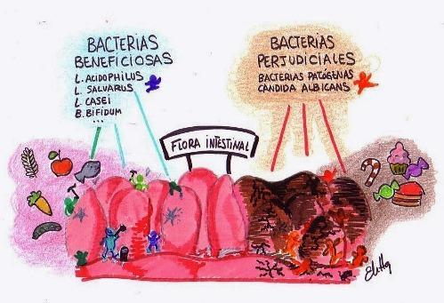 ¿Cómo esta formada la flora intestinal?