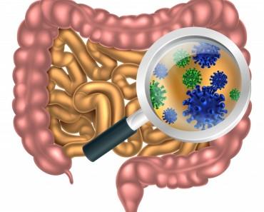 ¿Qué función tiene la flora intestinal?