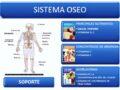 Generalidades de los huesos del sistema óseo