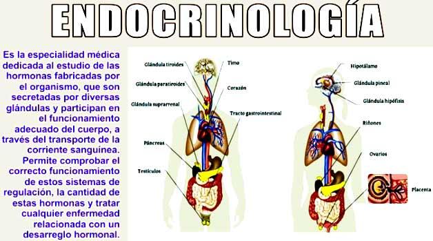 ¿Qué estudia la endocrinología?