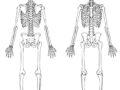 Sistema óseo para colorear