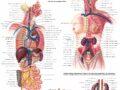 Anatomía y Fisiología del sistema linfático
