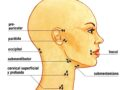 ¿Que son los nódulos linfáticos?