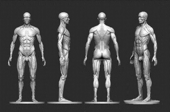 Ciencias que estudian el cuerpo humano