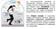 ¿Cómo se regula la temperatura del cuerpo humano?