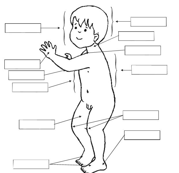 Imágenes del cuerpo humano sin nombre para niños