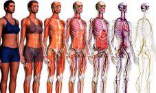 Curiosidades del cuerpo humano para niños