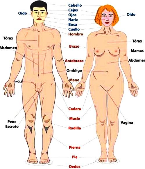 Diferencias físicas entre hombres y mujeres