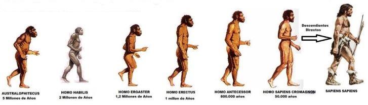 Evolución del cuerpo humano a través del tiempo