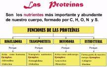 ¿Cuál es la función de las proteínas en el cuerpo humano?
