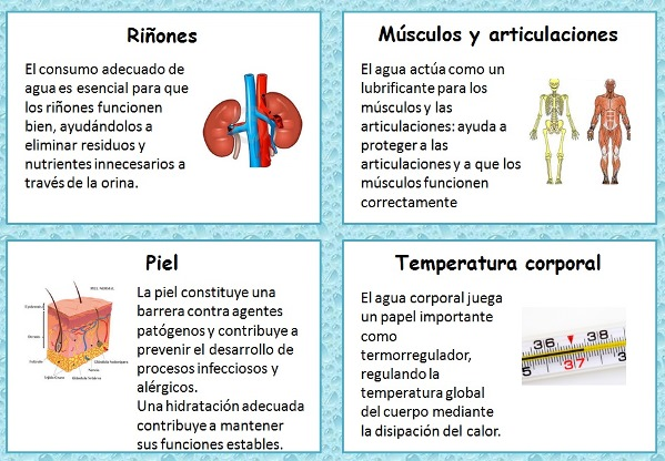 Principales funciones del agua en el cuerpo humano