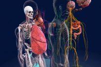 ¿Por qué es importante conocer las partes del cuerpo humano?