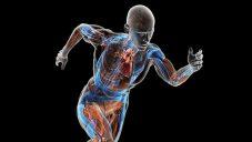 Movimientos voluntarios e involuntarios del cuerpo humano
