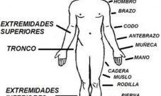 Principales órganos externos del cuerpo humano