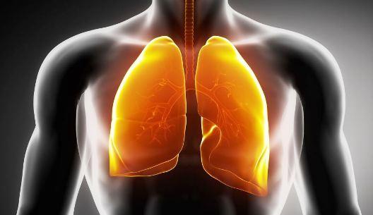 ¿Dónde se encuentra el oxígeno en el cuerpo humano?