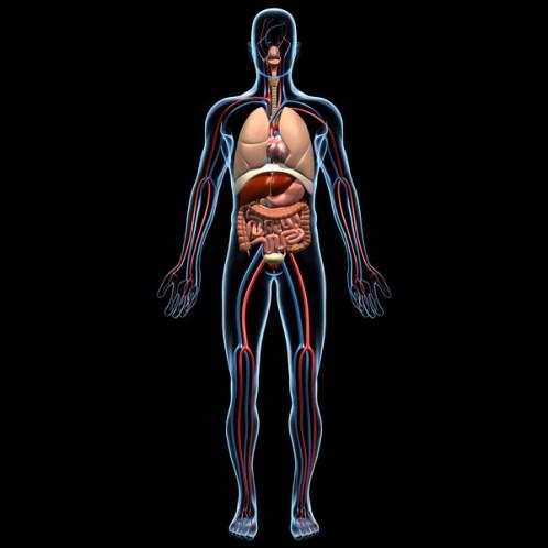 ¿Para qué sirve el cuerpo humano?