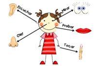 ¿Para qué sirven los 5 sentidos del cuerpo humano?