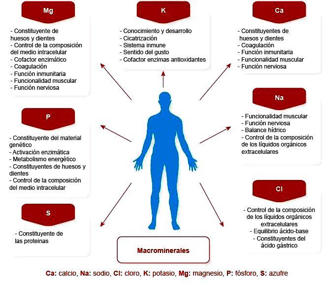 ¿Para qué sirven los minerales en el cuerpo humano?