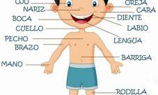 Partes del cuerpo humano para niños