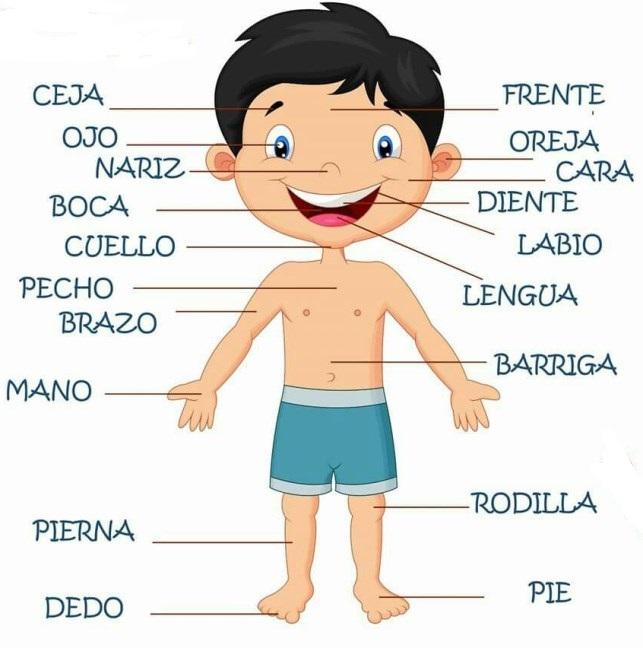 Partes del cuerpo humano para niños - Cuerpo humano