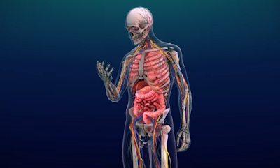 ¿Por qué el cuerpo humano es un sistema abierto?