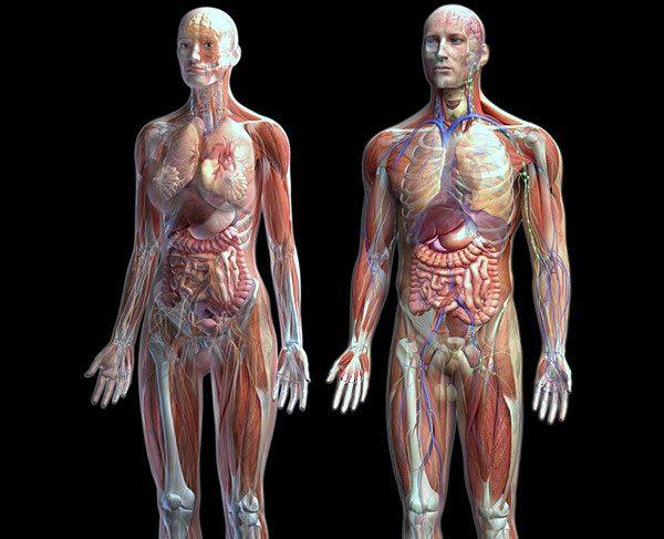 Definición del cuerpo humano.