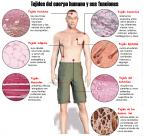 Tejidos del cuerpo humano y sus funciones