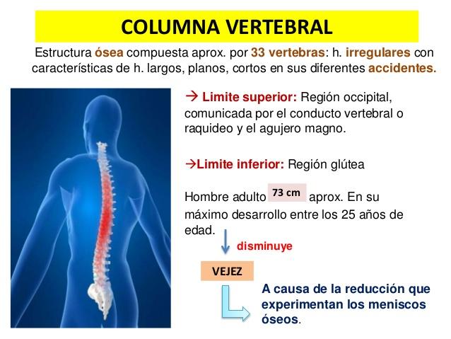 Características de la columna vertebral