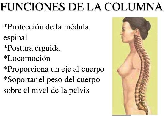 ¿Cuál es la función de la columna vertebral?