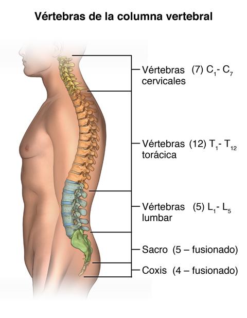 Imágenes de la columna vertebral