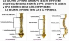 Importancia de la columna vertebral