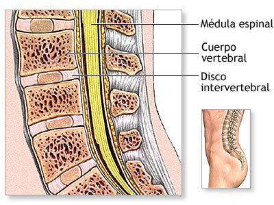 ¿Qué contiene el interior de la columna vertebral?