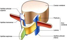 ¿Cuáles son las partes de las vértebras?