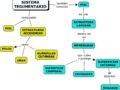 Estructura del sistema tegumentario