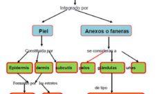 Partes y órganos del sistema tegumentario